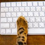 猫,パソコン,キーボード,