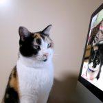 猫でもできる,猫,パソコン
